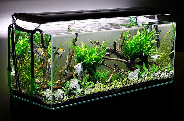 5 easy tips to keep your aquarium clean - Five easy cleaning tips get some time for yourself ...